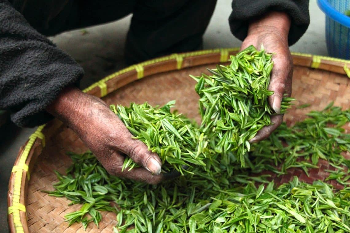 green-tea_Okinawa